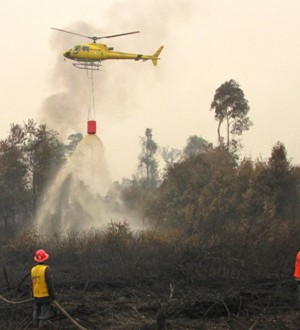 kebakarn hutan1